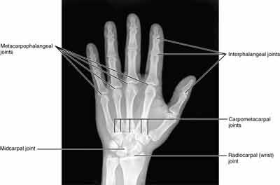 human-wrist-bone