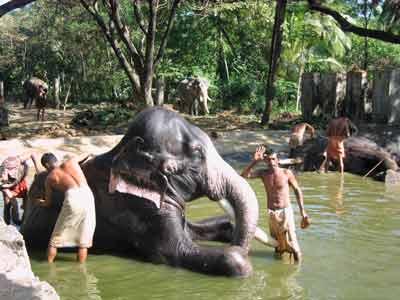 elephant-spa