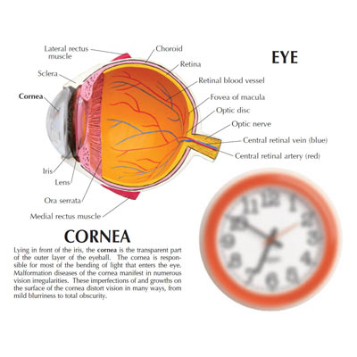 kids facts about human eye