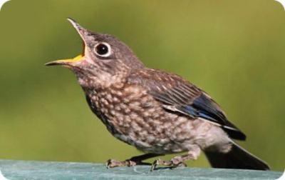 bird singing song